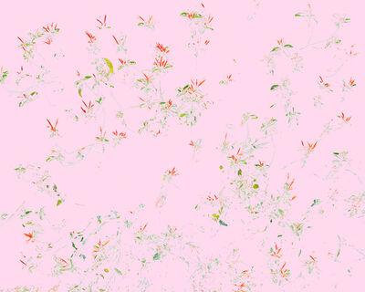 Aaron ROTHMAN, 'Wildflowers C1', 2014