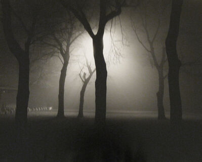 Alex Fradkin, 'Six Trees at Night: Chicago, IL'
