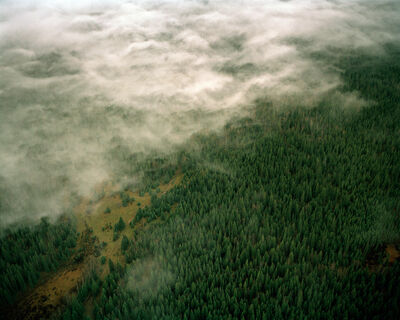 Eamon Mac Mahon, 'Alberta Forest Fog', 2011