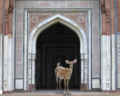 Karen Knorr, 'The Messenger,PuranaQuila, New Delhi'