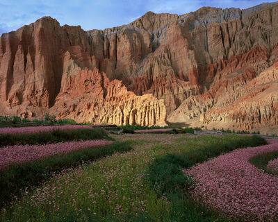 Kenneth Parker, 'Cliffs and Buckwheat Blossoms, Dhakmar, Mustang Tibetan Plateau'
