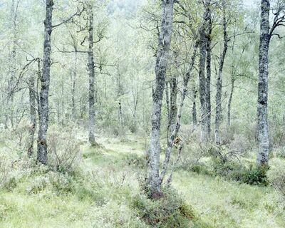 Juliane Eirich, 'Forest', 2014