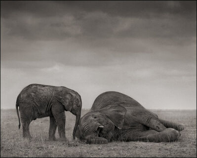 Nick Brandt, 'The Two Elephants, Amboseli', 2012