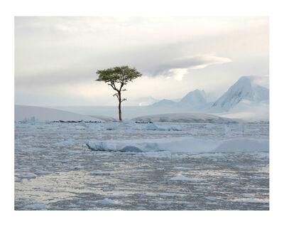 Max Steven Grossman, 'Antartica No. 2, ed. 1/5', 2010