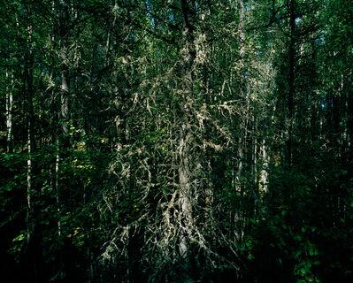 Eamon Mac Mahon, 'East From Birch Mountain, Alberta', 2009