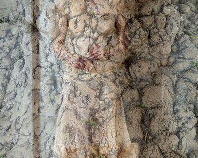 Cynthia Fusillo, 'Tree body', 2020