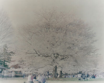 Ori Gersht, 'Showa Memorial Park, Hanami 04', 2010