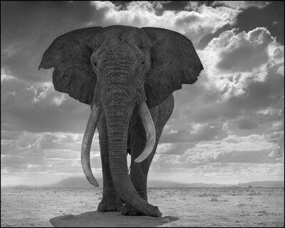 Nick Brandt, 'Elephant Statue', 2011