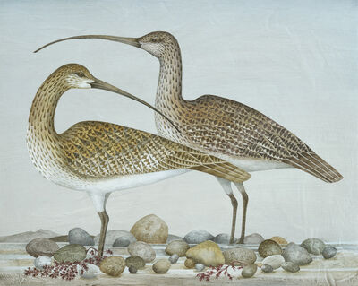 Harriet Bane, 'Two Curlews', 2018