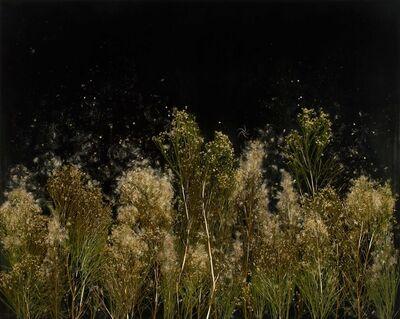 Mayme Kratz, 'Dark Garden', 2020