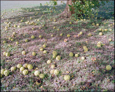 Iris Wu 吴靖昕, ' Untitled(fruits)', 2020