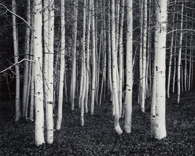 John Sexton, 'Aspen, Dusk, Conway Summit, California', 1978