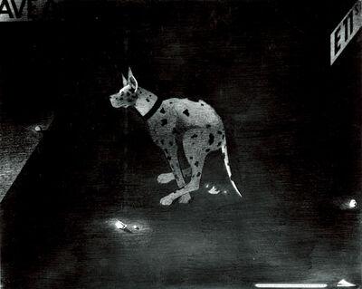 Anton van Dalen, 'Dog on E 11 St', 1975