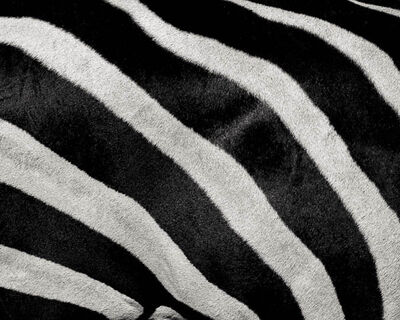 Paul Coghlin, 'Zebra Crossing', ca. 2012