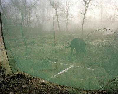 Maureen Drennan, 'Shasta', 2009