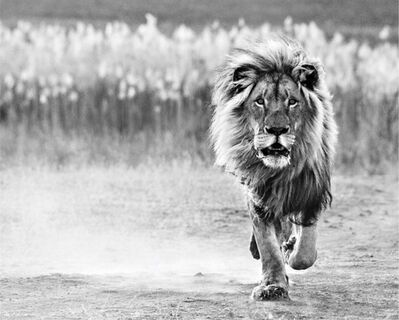 David Yarrow, 'One Foot On The Ground', 2014