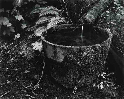 Edward Weston, 'Point Lobos, 1948 (printed later)'