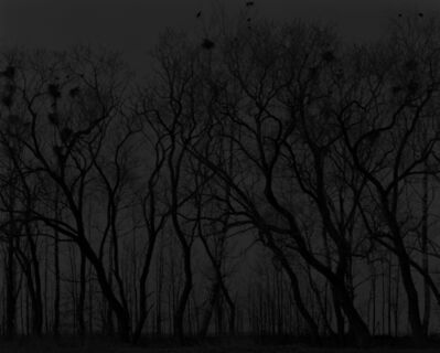 Alexandra Catiere, 'Trees at night', 2013