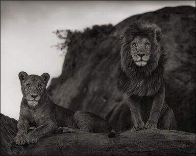 Nick Brandt, 'Lion Couple, Serengeti', 2010