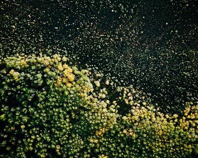 Eamon Mac Mahon, 'Deciduous and Coniferous Trees', 2004