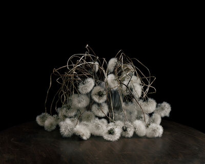 Brigitte Lustenberger, 'Flowers XIX', 2016