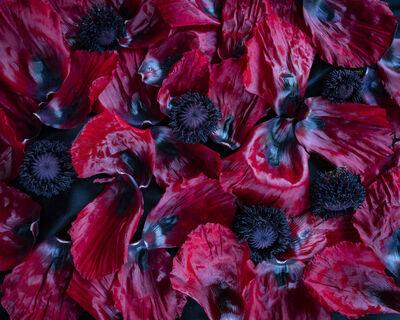 Cig Harvey, ' Poppies', 2020