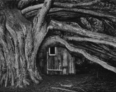 Robert Taylor, 'Cypress, Whaler's Cabin, Point Lobos', 1978