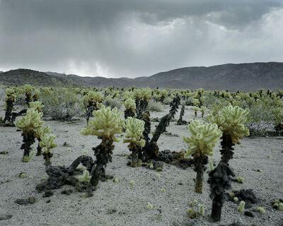 Laura McPhee, 'Electrical Storm and Cholla Cactus, Joshua Tree National Park, California', 2015