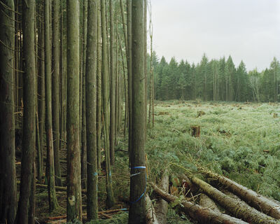 Eirik Johnson, 'Freshly Felled Trees, Nemah, Washington', 2007