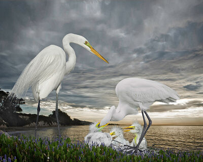 Cheryl Medow, 'Great Egret Family in the Storm', 2019