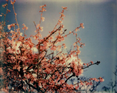Julia Beyer, 'Cherry Blossom Skies II', 2014