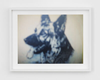 Barbara Ess, 'Attenti al Cane (Cyan Dog)', 2007