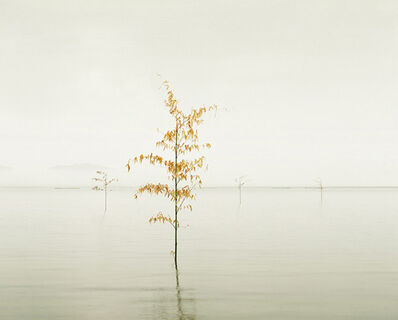 David Burdeny, 'Orange Leaves, Ariake Sea, Kyushu, Japan', 2010
