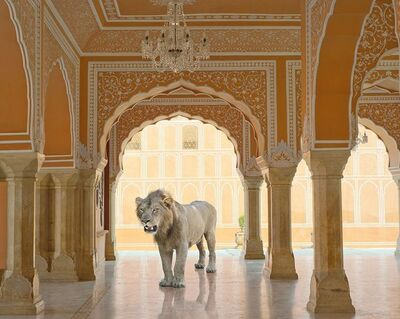 Karen Knorr, 'The Last Lion, Diwan-I-Khas, Jaipur City Palace, Jaipur', 2013