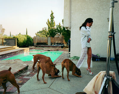 Larry Sultan, 'Boxer dogs, Mission Hills', 1999-2003