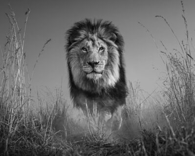 David Yarrow, 'The King and I ', 2016