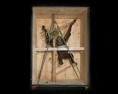 Richard Barnes, 'Smithsonian Monkey', 2005