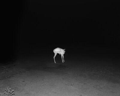 Matthew Genitempo, 'Untitled (Jasper)', 2016-2017
