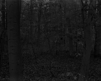 Dawoud Bey, 'Night Coming Tenderly, Black: Untitled #15 (Forest with Small Trees)', 2017