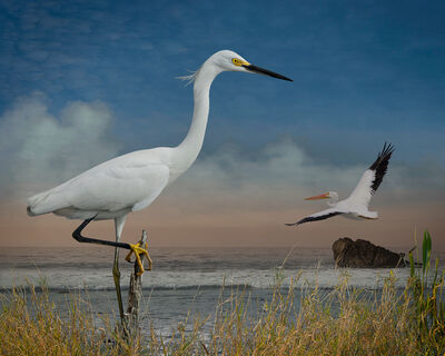 Cheryl Medow, 'Snowy Egret and a White Pelican', 2017