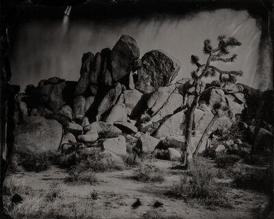Eric Overton, 'Rock with Joshua Tree #1', 2016