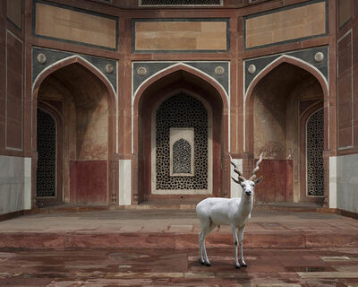 Karen Knorr, 'The Witness, Humayun's Tomb, New Delhi'