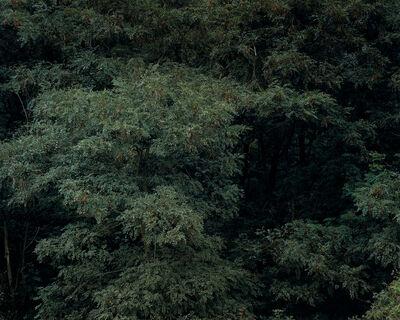 Ricarda Roggan, 'Baumstück 2', 2007/2008