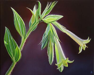 "Dyana Hesson, '""Morning Light"" Green Flavored Macromeria, X Diamond Ranch, Arizona', 2020"
