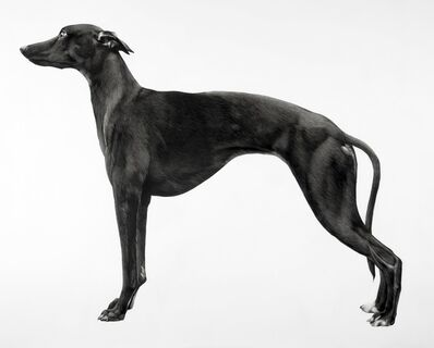 Jonathan Delafield Cook, 'Whippet II', 2016