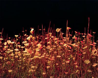 Jeremy Chandler, 'Night Meadow ', 2017