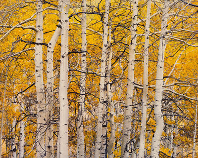 Christopher Burkett, 'High Mountain Aspen, Colorado', 2016