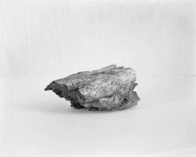 Fabio Barile, 'Worm eaten trunk', 2020