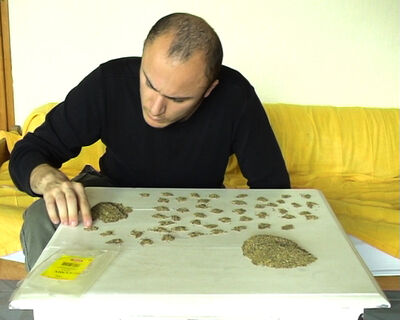 Ovidiu Anton, 'Compter 100g de Cumin', 2009