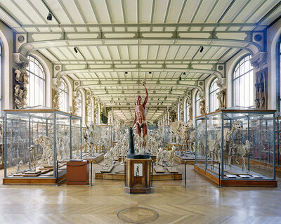 Richard Barnes, 'Flayed Man, MCA, Paris, from Animal Logic', 2008
